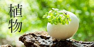 観葉植物や植物の贈り物
